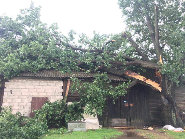 Powalone drzewo uszkodziło dach budynku gospodarczego